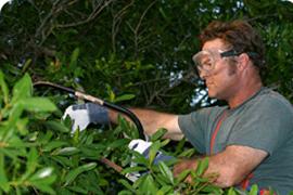 Tree surgeon in Kingston